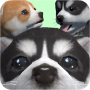 icon Cute Pocket Puppy 3D - Part 2